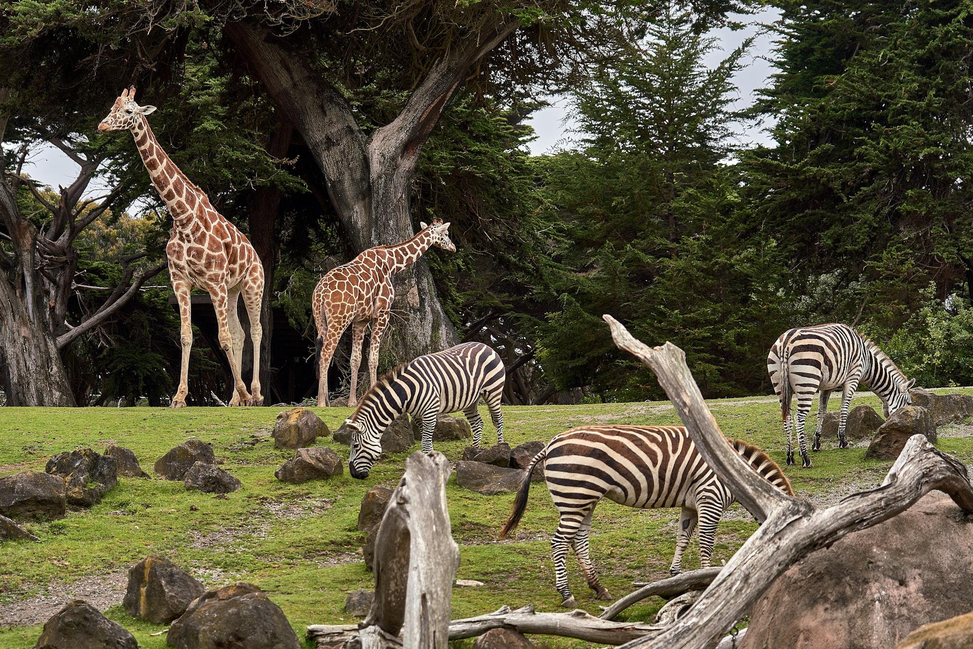 6x de leukste dierenparken!