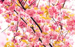 De Orchideeën Hoeve