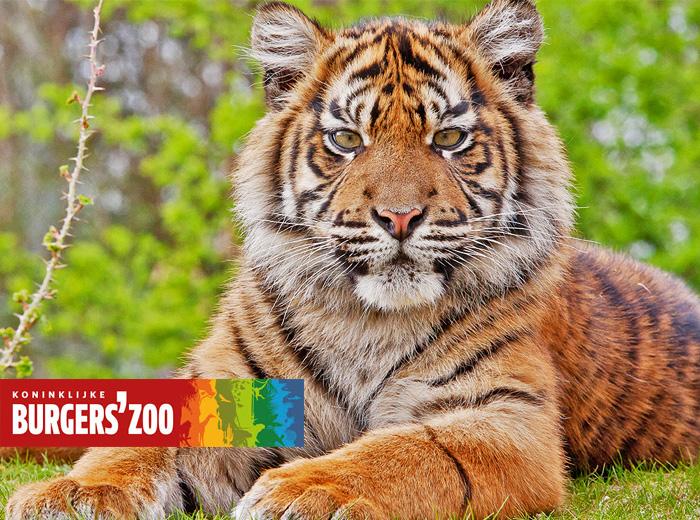 Sta oog in oog met je favoriete dier bij Burgers' Zoo!...