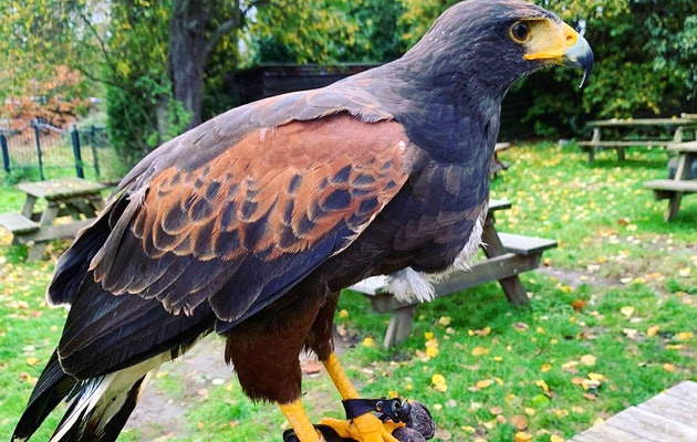 Entreeticket Falcon Crest Eindhoven