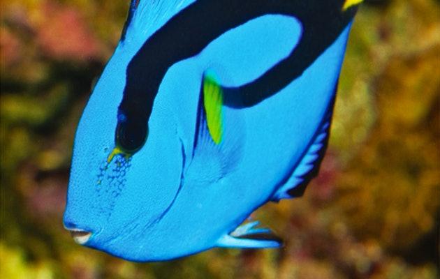 Word verrast door de bijzondere onderwaterwereld bij SEA LIFE Scheveningen