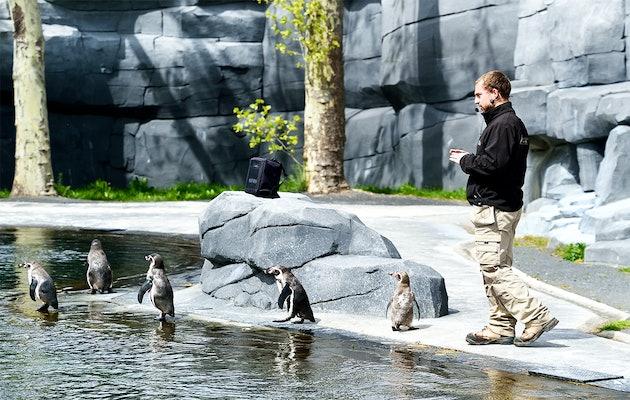 Billet d'entrée pour Parc Zoologique de Paris