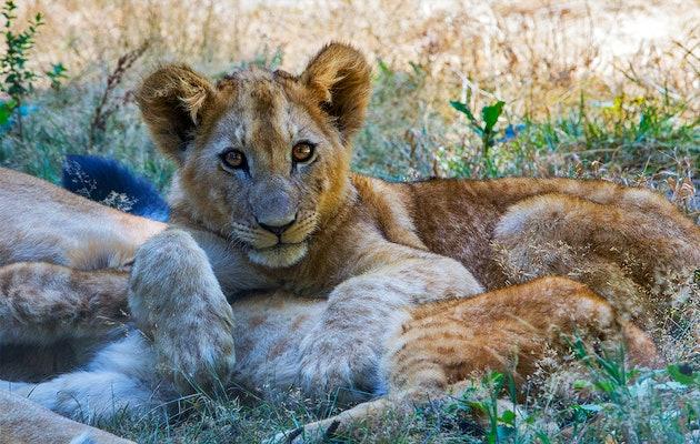 Billet d'entrée pour Thoiry Safari ZOO