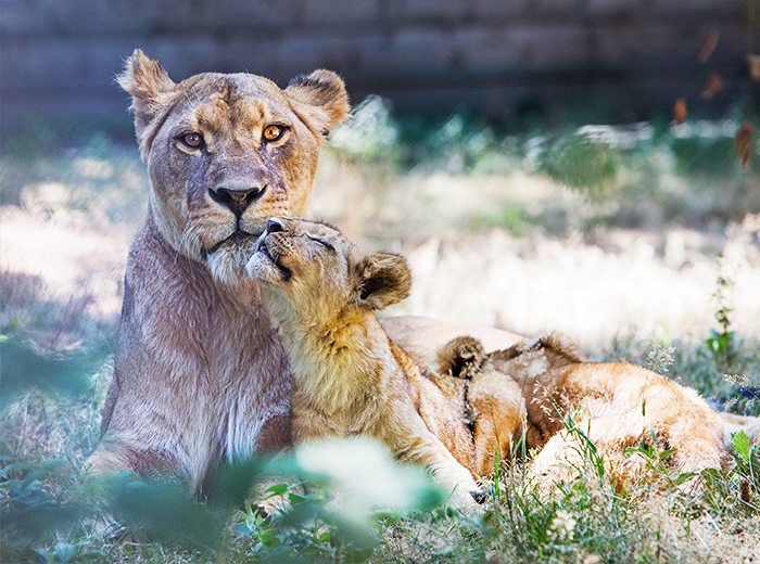 Entreeticket voor Thoiry Zoo Safaripark