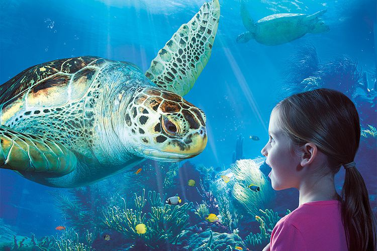 Korting Ontdek de rijke onderwaterwereld bij SEA LIFE Blankenberge!
