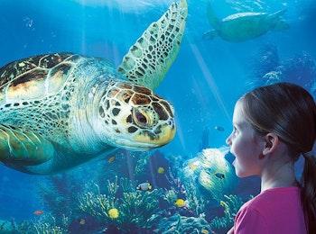 Ontdek de rijke onderwaterwereld bij SEA LIFE Blankenberge!