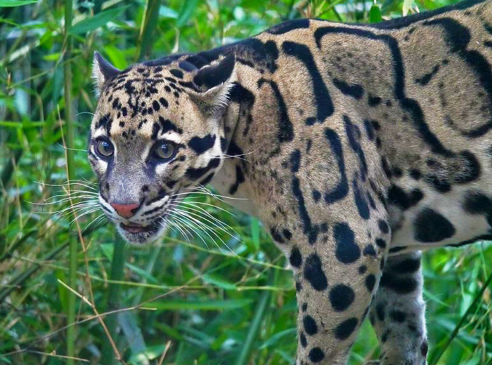 Ontmoet diersoorten uit de hele wereld in dierenpark...