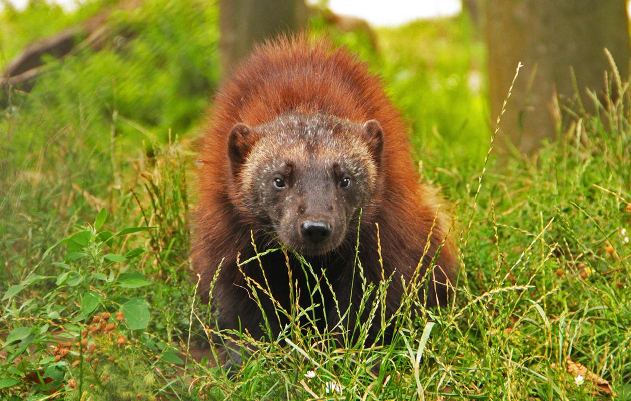 Ontmoet diersoorten uit de hele wereld in dierenpark Zie ZOO Volkel