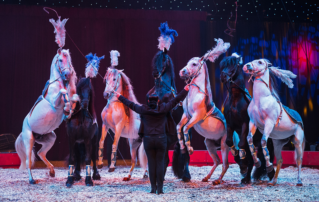 Een fantastische voorstelling bij Kerstcircus Enschede...