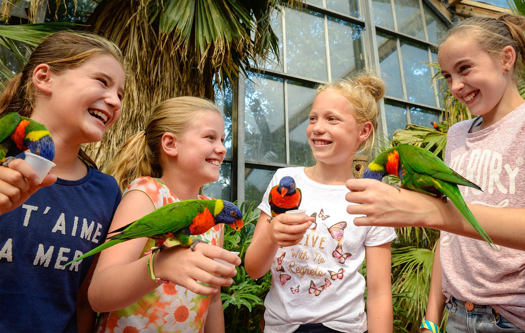 Ontdek een wereld aan vogels in vogelpark Avifauna...