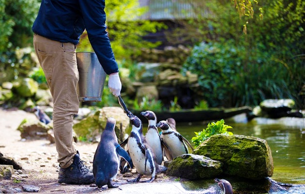 Entreeticket Vogelpark Avifauna