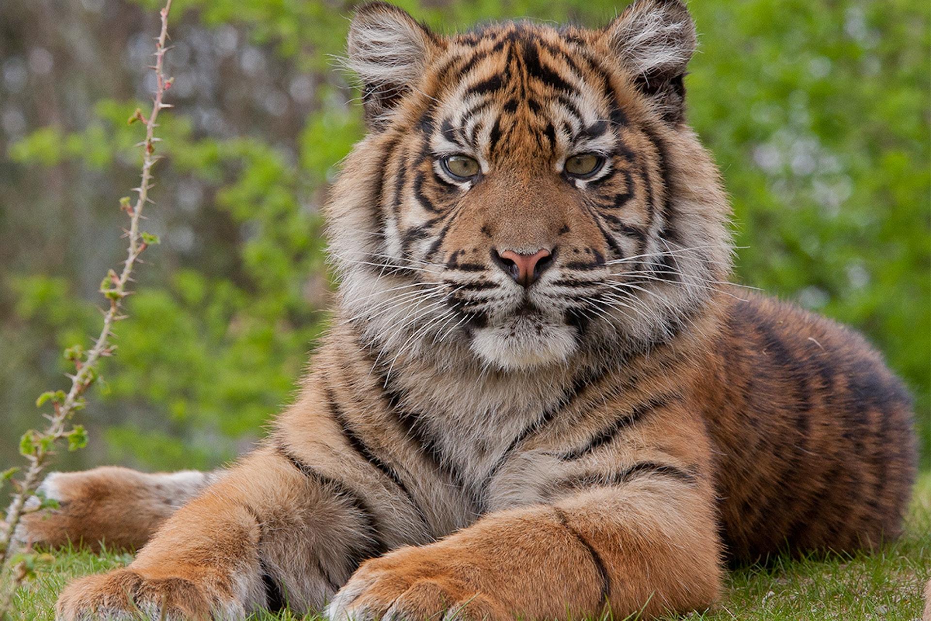 Ontmoet jouw favoriete dieren bij Burger's Zoo!