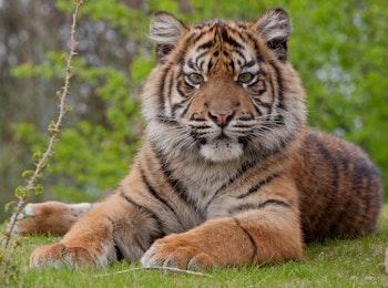 Sta oog in oog met je favoriete dier bij Burgers' Zoo!