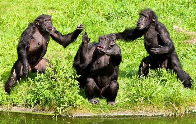 Entreeticket Burgers' Zoo Zomeravonden
