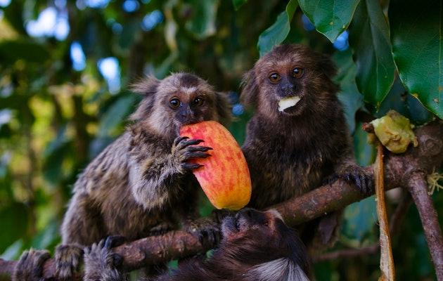 Entreeticket voor Berkenhof Tropical Zoo
