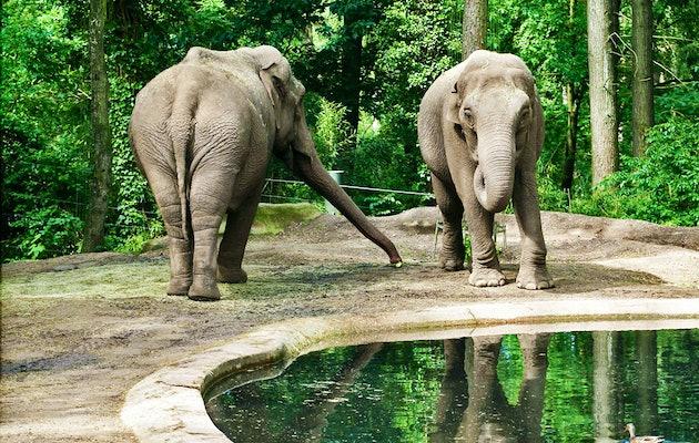 Face à face avec vos animaux préférés à Burger's Zoo!