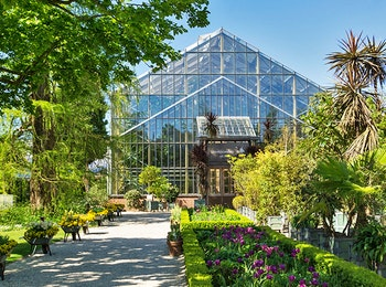 Bezoek de botanische tuin Hortus botanicus in Leiden