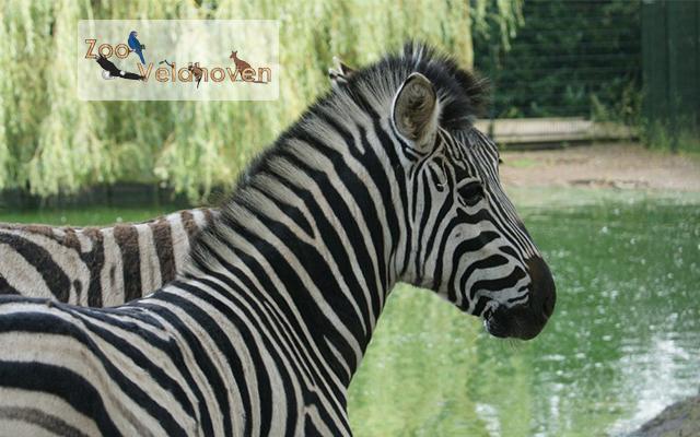 Entreeticket voor Zoo Veldhoven