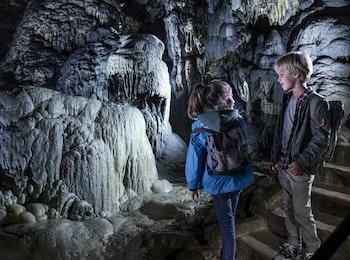 Découvrez les Grottes de Han et le parc animalier en Belgique