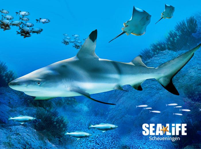 Ontdek de onderwaterwereld bij SEA LIFE Scheveningen