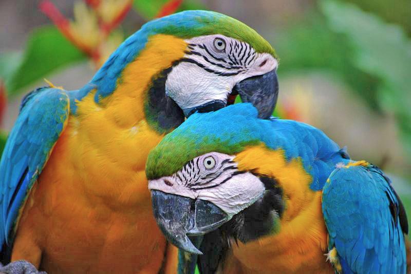 Bewonder, voer en leer over de dieren in Zoo Veldhoven