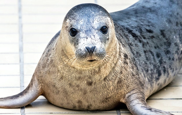 Kom langs en hoor wat zeehonden vertellen bij Zeehondencentrum Pieterburen