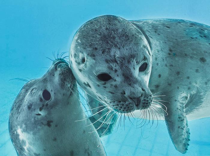 Korting Hoor wat zeehonden vertellen bij Zeehondencentrum Pieterburen