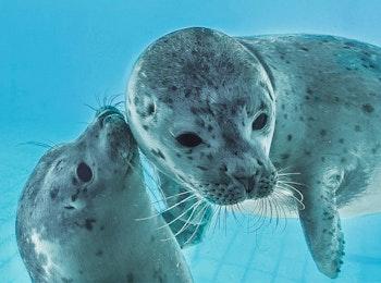 Hoor wat zeehonden vertellen bij Zeehondencentrum Pieterburen