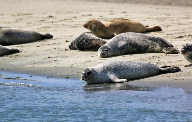 Zeehondensafari bij De Vrolijke Visser